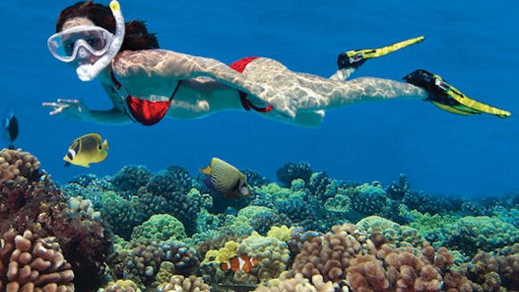 浮潜装备_基韦斯特活珊瑚礁3小时浮潜体验之旅