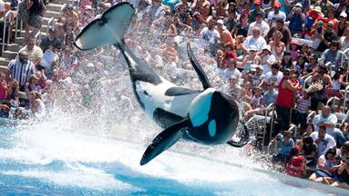 【人气热卖】圣地亚哥海洋世界1日门票(特有精彩虎鲸表演)