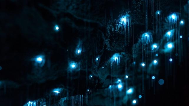 「黃金海岸自然橋螢火蟲國家公園」的圖片搜尋結果