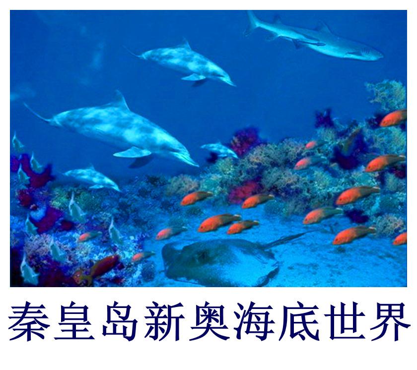 秦皇岛新奥海底世界门票/新奥海底世界/海豚表演馆