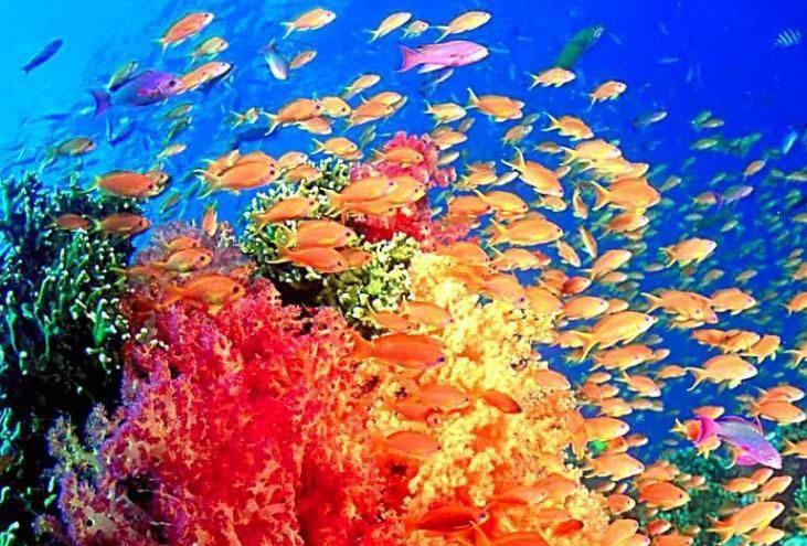 秦皇岛新澳海底世界(含海豚表演馆) 票面85