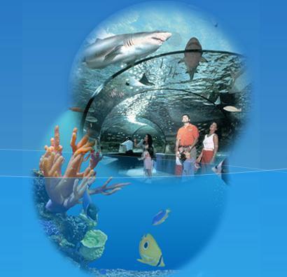 秦皇岛新澳海底世界门票 秦皇岛海洋馆门票(含海豚表演馆)
