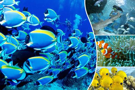 北京工体富国海底世界海洋馆 门票 电子票 含表演