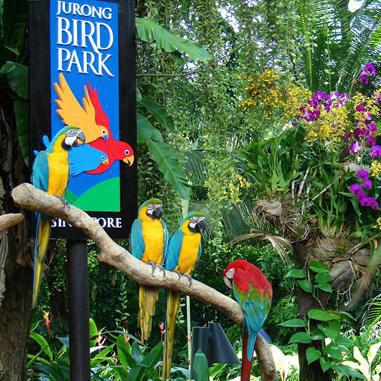 新加坡飞禽动物园 singapore