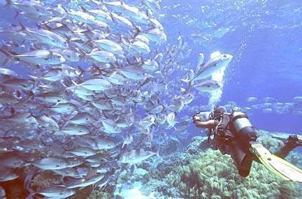 北京富国海底世界 景点门票