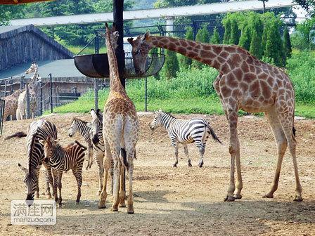 大连动物园门票大连森林动物园门票(一期 二期 索道 表演)含车送