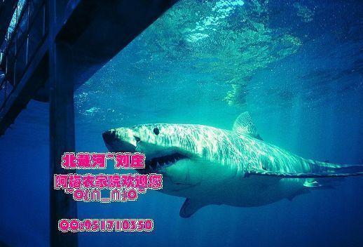 秦皇岛,北戴河打折门票--新澳海底世界(不含海豚表演馆)