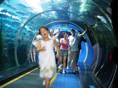 青岛景点门票信息 > 海底世界成人门票:大通票85元,小通票70元,定金10