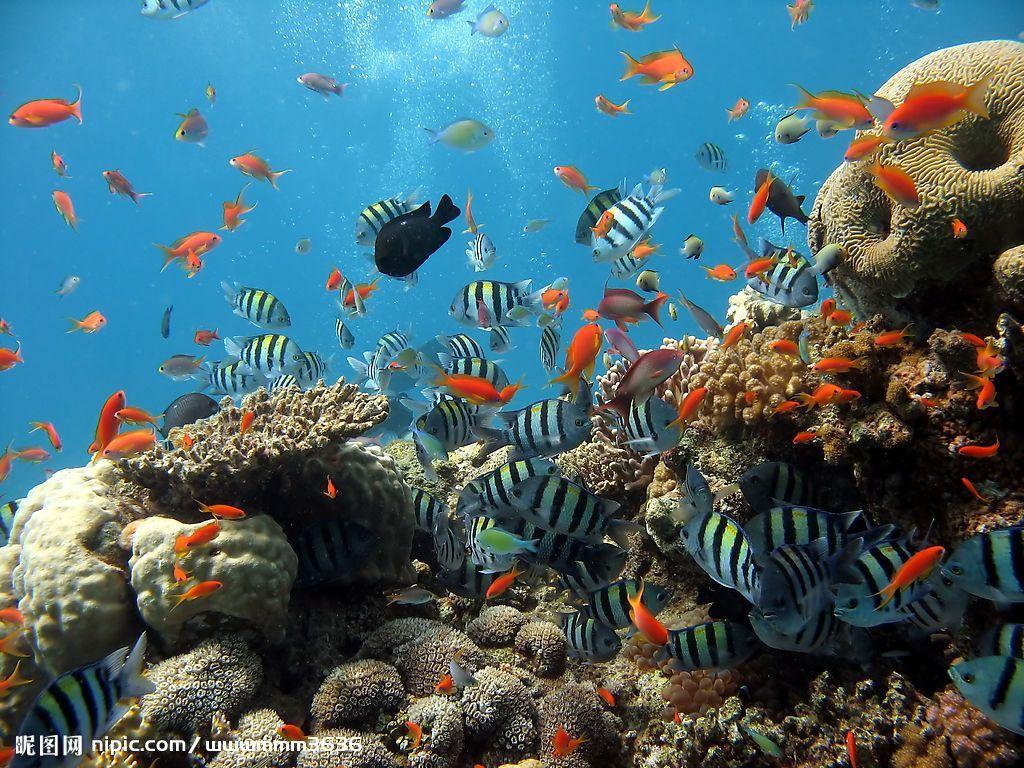 北京富国海底世界门票特价68元
