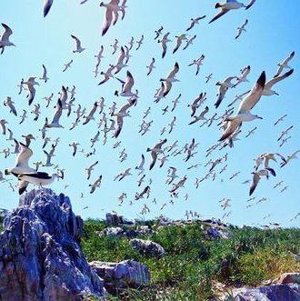 山东威海旅游/景点/鸥鹭王国/野驴岛/西霞口海驴岛风景区优惠门票
