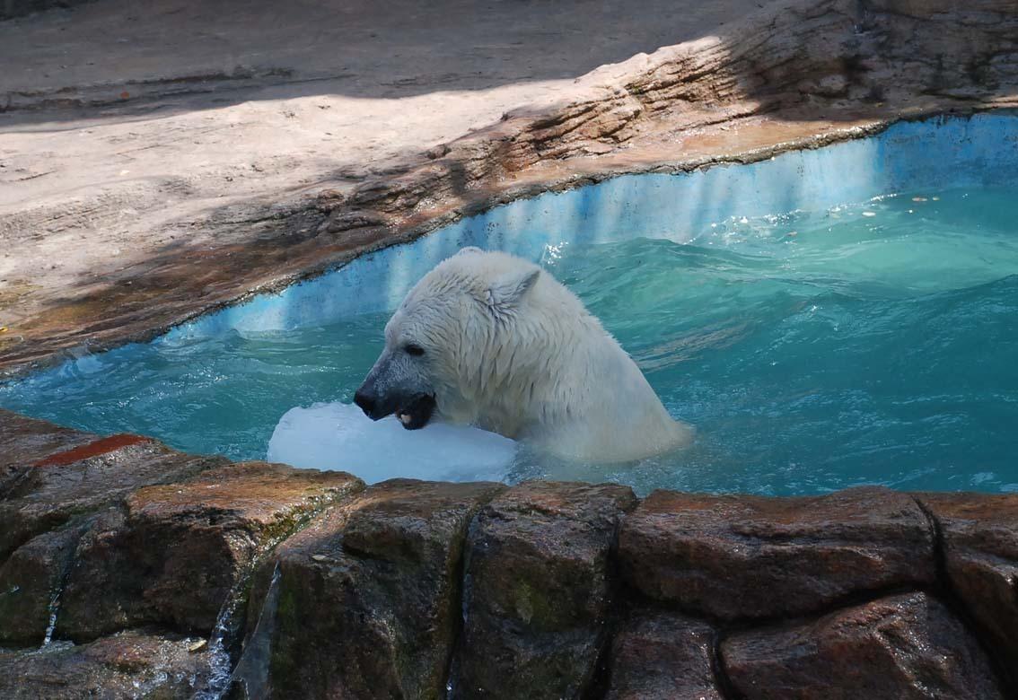 大连动物园大连森林动物园通票