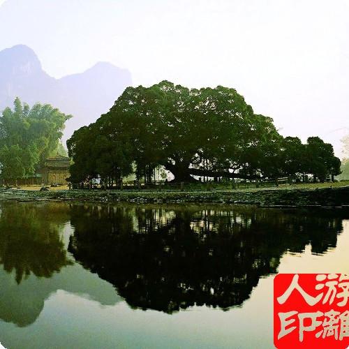 【套票】桂林旅游/阳朔景点门票/蝴蝶泉 大榕树 门票