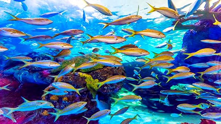 海底光照区生物