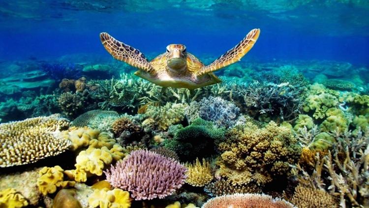 澳大利亚 凯恩斯  凯恩斯豪华游船蜕变号外海大堡礁超值一日游(直升机