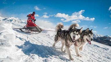 挪威特罗姆瑟哈士奇雪橇特色驾驶体验(白天/夜间可选)